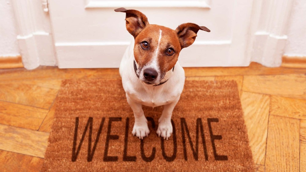 dog-welcome