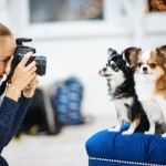Photographing pets