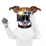 Photographing your pets