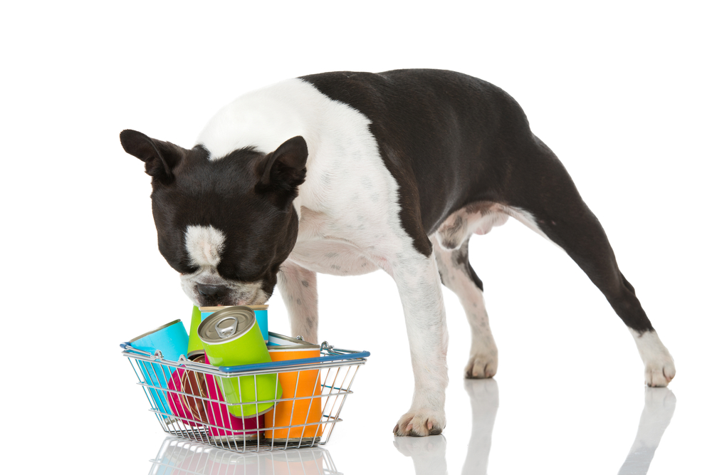 Why wet or tinned dog food is still a popular choice for dog owners