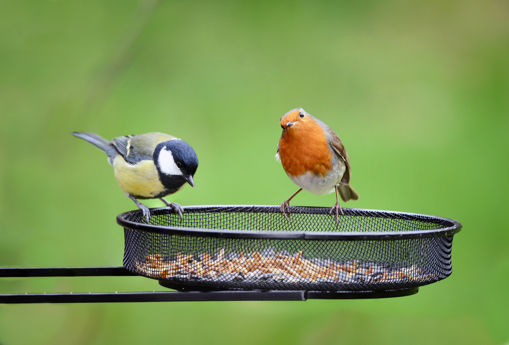 What to feed wild birds