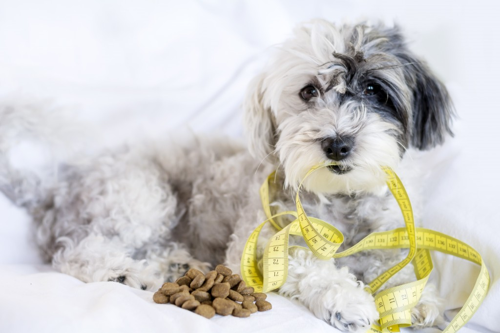 Lite food options for dogs